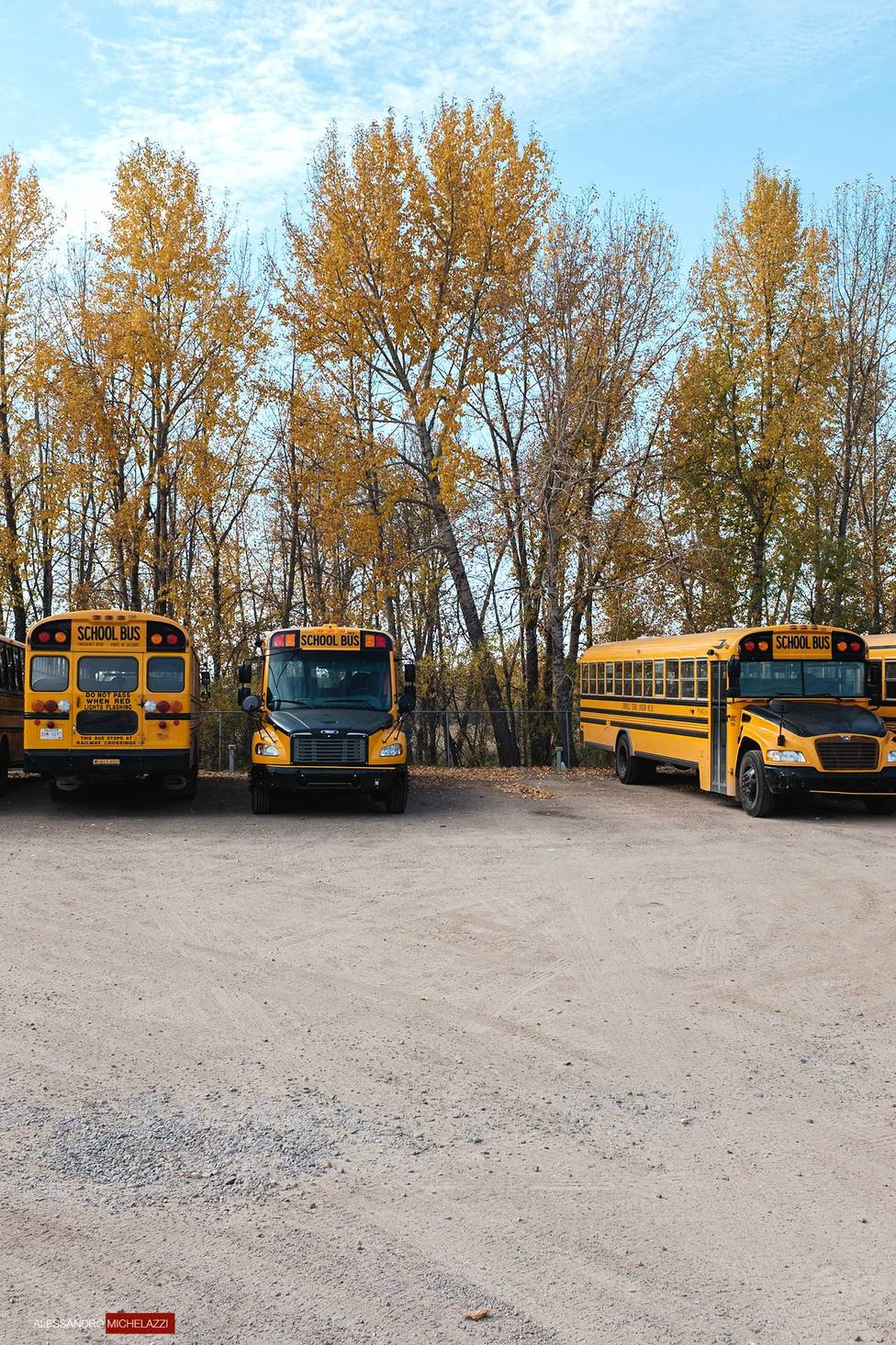 Yellow buses in Calgary, Canada