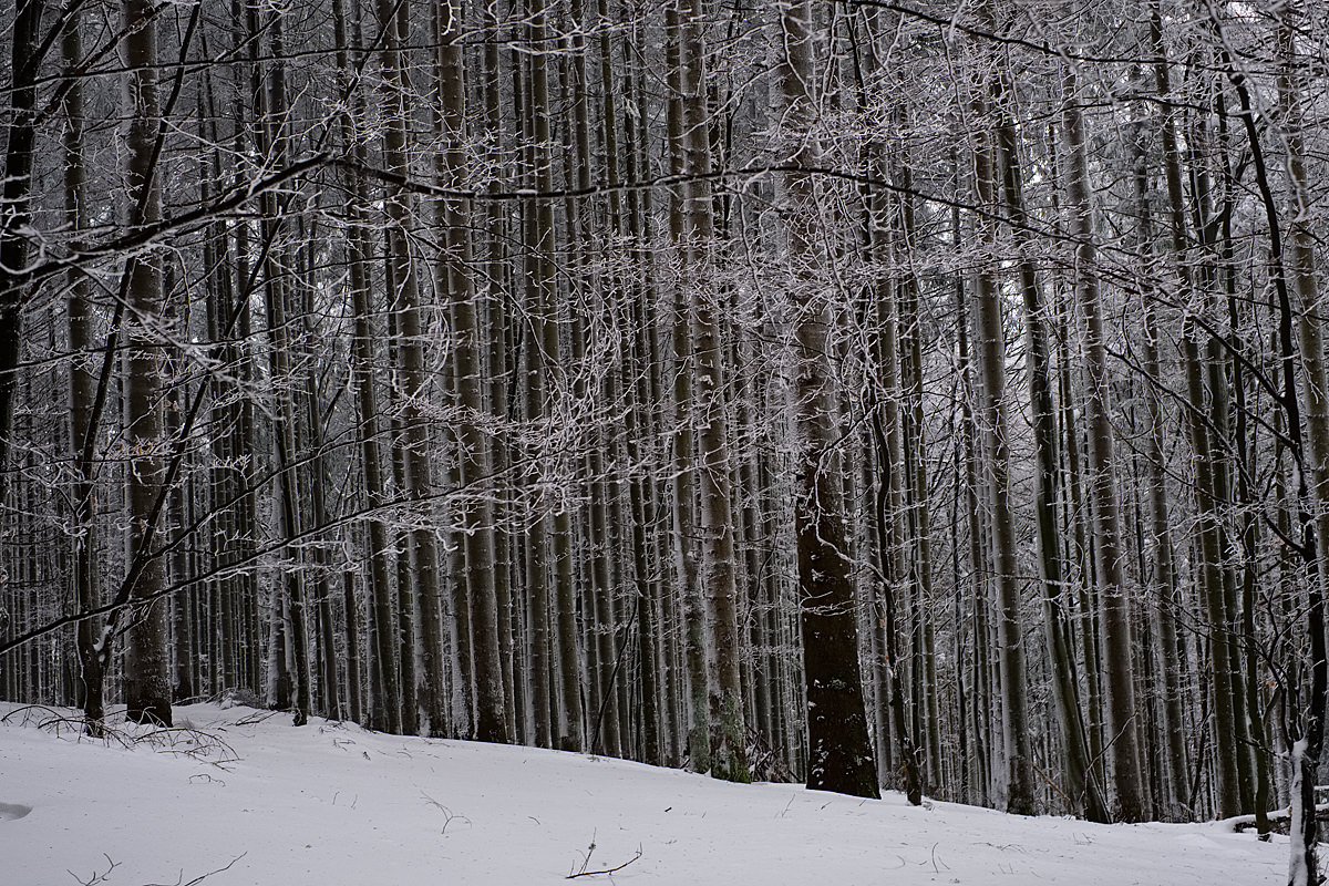 casentino tuscany snow photos